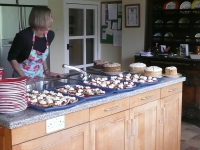 kirstead-tours-tea-and-scones