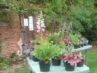 kirstead-tours-beautiful-plants-for-sale